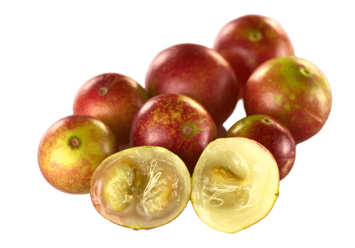camu-camu superfruit rich in vitamin C